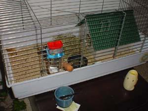 Coniglio nano in casa cheap avere un coniglio in casa - Lettiera coniglio nano ...